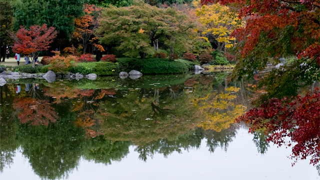 昭和記念公園 日本庭園 紅葉