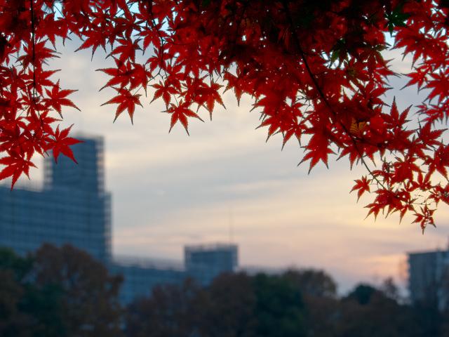 夕焼け空の紅葉
