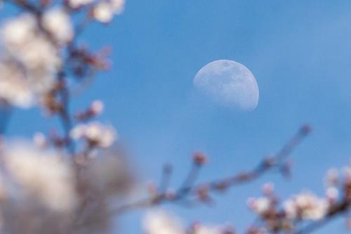 花陰の半月