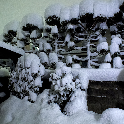 2.14大雪 多摩