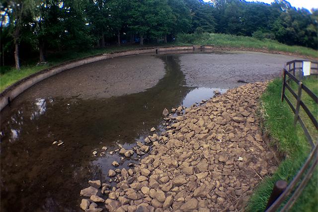 池の掻い掘り