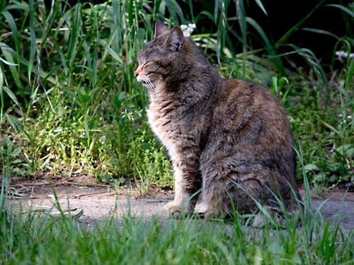 「道の猫」